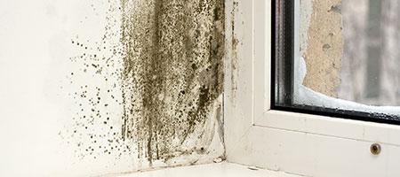 Schimmel in huis? Wij halen vochtproblemen uit uw muur!